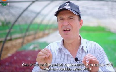 Instruction video – Reducing chemical residues for export